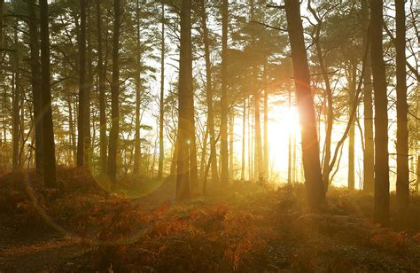 Sun Shining Through Trees In Woods Photograph By Ron Bambridge