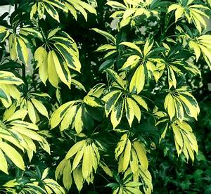 Plante D Intérieur Pas Cher : toutes les plantes vertes d int rieur fashion designs ~ Dailycaller-alerts.com Idées de Décoration