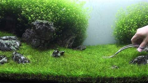 Hair Grass Aquascape by Eleocharis Sp Mini Hair Grass Aqua End 7 11 2020 10 37 Am