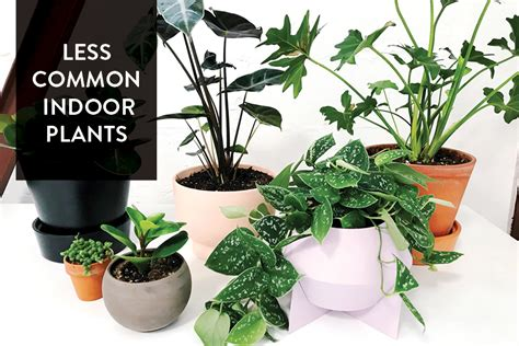 Our Favorite Less Common Indoor Plants