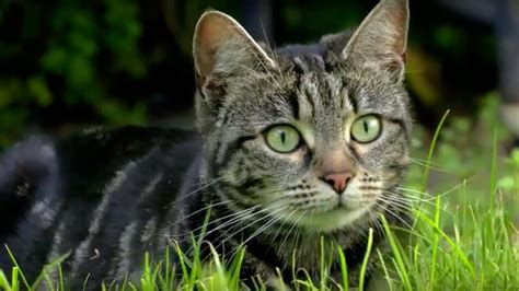 cats hunt why bbc uncovered earth animals being