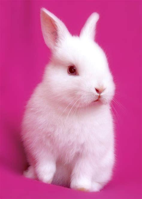 pink bunny wallpaper wallpapersafari