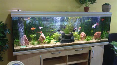aquarium design location d aquarium 224 parempuyre proche de bordeaux gironde 33