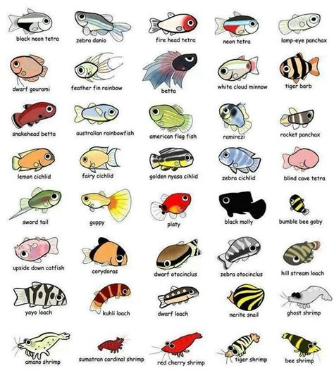 aquarium fish names  images  aquarium ideas