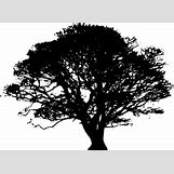 Family Tree Roots Background   297 x 216 png 24kB