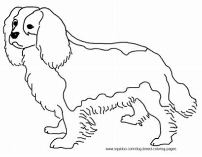 Spaniel Charles Cavalier Coloring King Pages Dog