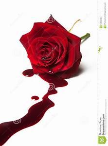 Bleeding rose stock photo. Image of romance, valentine ...