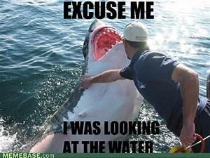 What can the funniest shark memes on the internetz teach ...