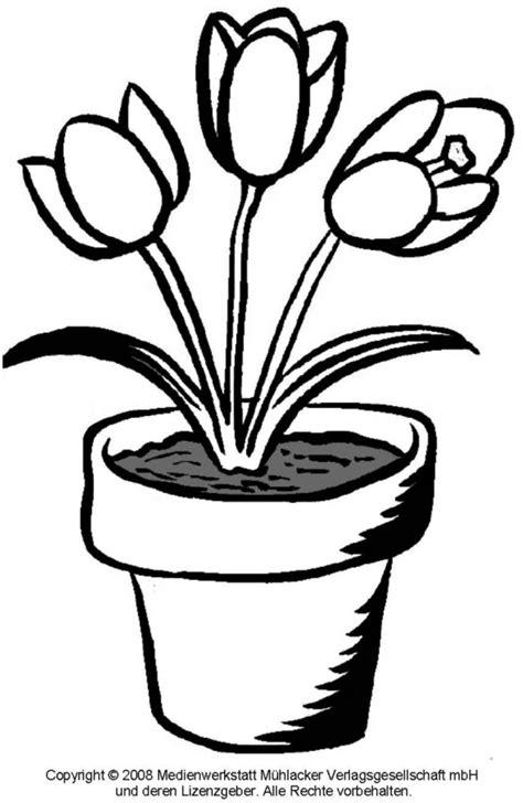 ausmalbild tulpe  medienwerkstatt wissen