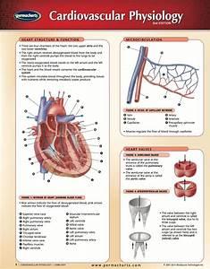 Cardiovascular Physiology Chart