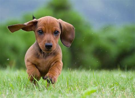 dog stock   amazing images