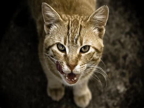 Fakti par kaķiem. (Iztulkoti) - Spoki - bildes 2