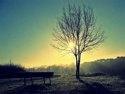 Peace Desktop Windows تعلم Sunlight Mac Trees
