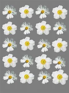 flower wallpaper | We Heart It | wallpaper, flowers, and ...