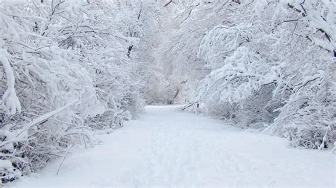 Winter Wonderland Wallpaper ·① Download Free Stunning Wallpapers For Desktop Computers And