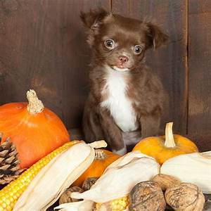 can dogs eat nuts almonds peanuts dog health food tips