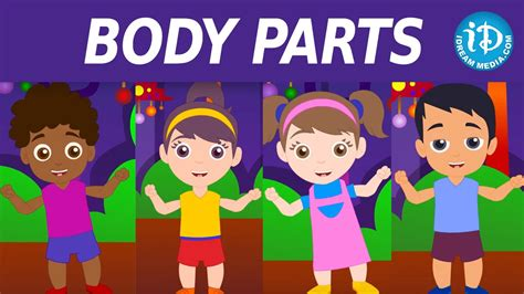 body parts song  kids nursery rhymes body parts
