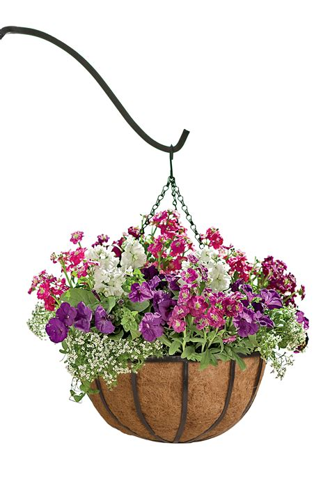 hanging flowers hanging flower baskets