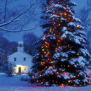 let there be lights martha stewart With lighting outdoor trees for xmas