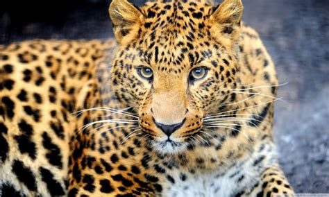 Myxer Wallpapers Animals - hd wallpapers of animals gallery