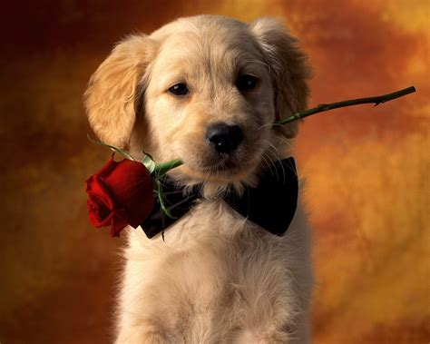 dogs hd wallpapers background images wallpaper abyss
