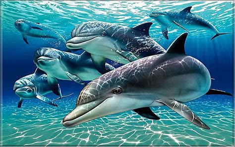dolphins wallpaper  pc tablet  mobile