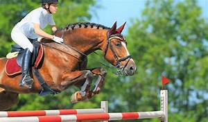 12 Best Horse Breeds For Jumping