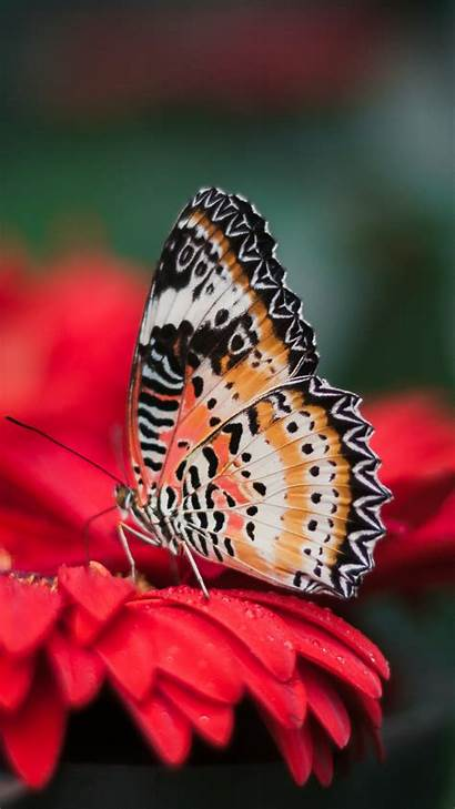 Butterfly Flower Iphone Bright Background Wallpapers Wings