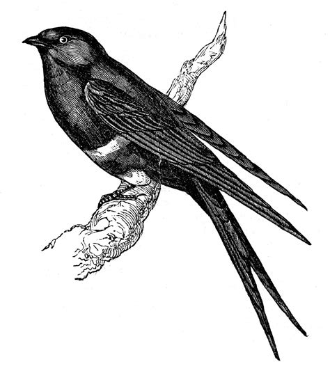 class ideas on pinterest graphics fairy vintage birds