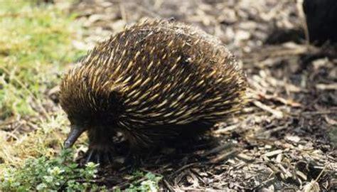 list  animals living   australian tropical savanna