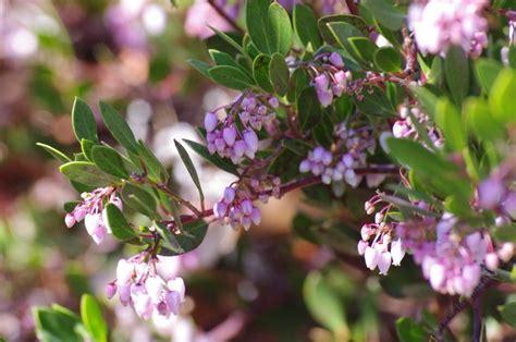 drought tolerant plants for a san jose area garden