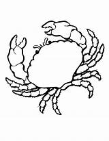 Coloring Crab Animals Pages Shells Sea Colouring Printable Animal Drawing Crabs Shell Marine Seashell Clipart Realistic Farm Cliparts Crawfish Clip sketch template