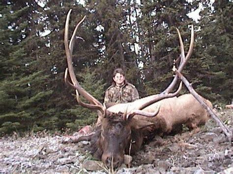 Hunt for Idaho trophy class elk bulls - Archery in rut - or Rifle hunts u2014 MilesHighOutfitters.com