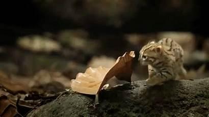 Spotted Rusty Cat Smallest Wild Kitten Leaf