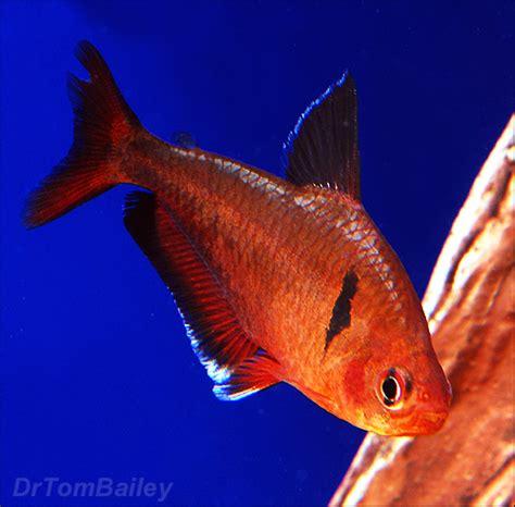 pet fish talk show