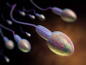 Epigenetic Changes In Sperm Found 10 Years After Chemo