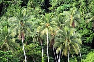 coconut tree essay in english list creative writing prompts creative writing prompt 2nd grade