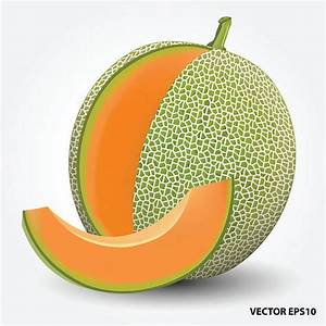 Royalty Free Cantaloupe Clip Art, Vector Images ...