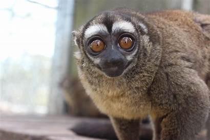 Owl Monkey Rescue Wildlife Monkeys Insects