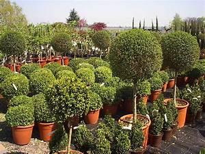Kleine Bäume Für Vorgarten : die aktion b ume f r den vorgarten geht in die 2 runde ~ Michelbontemps.com Haus und Dekorationen
