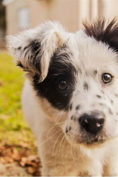 Mutt Dog Puppies Whats Puppy Cutest Adorable