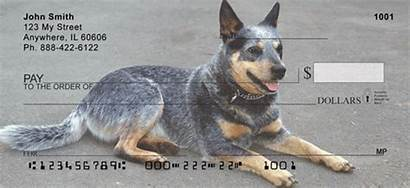 Australian Cattle Heeler Shepherd Mix German Dog
