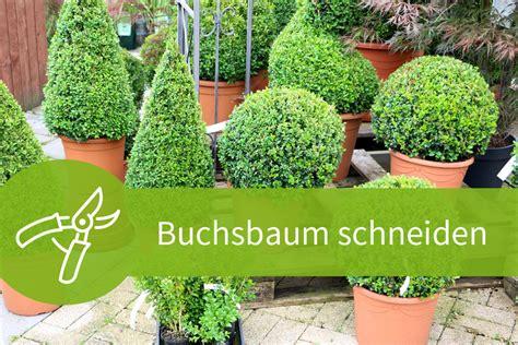 Hecke Schneiden Zeiten by Buchsbaum Schneiden Eine Anleitung Mit 4 Schnitten