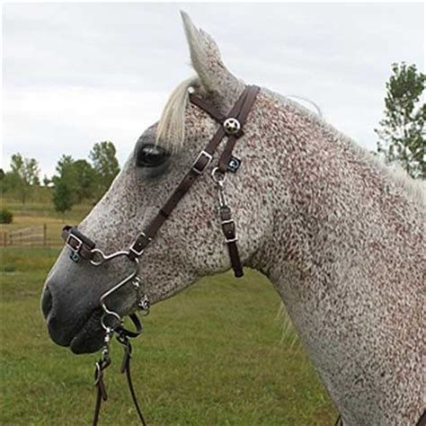 Horse Fly Rugs by Best Discount Price On S Hackamore Bridle Combos