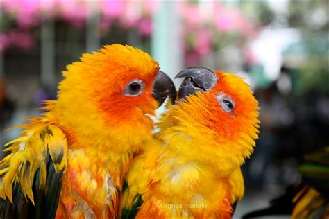 Hd Birds Pictures Hd Desktop Wallpapers 4k Hd