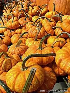 The, Great, Pumpkin, Stencil, Debate