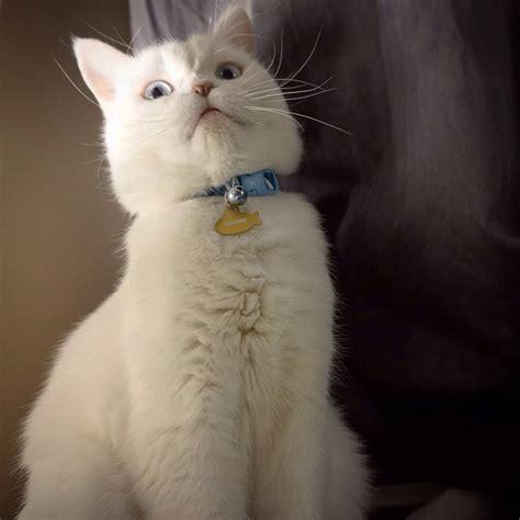 Funny Cats Part 159 40 Pics 10 S Amazing Creatures