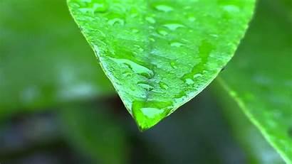 Rain Leaves Leave Pixelstalk Wiki