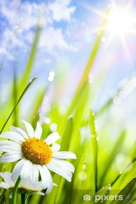 fototapet naturlig sommar bakgrund med tusenskoenor blommor
