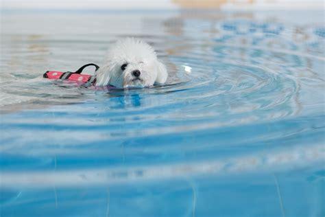 Constant Temperature Indoor Swimming Pool